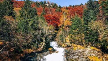 Foresta dei Bagni di Masino